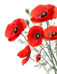 [Image: poppy-silo.png]
